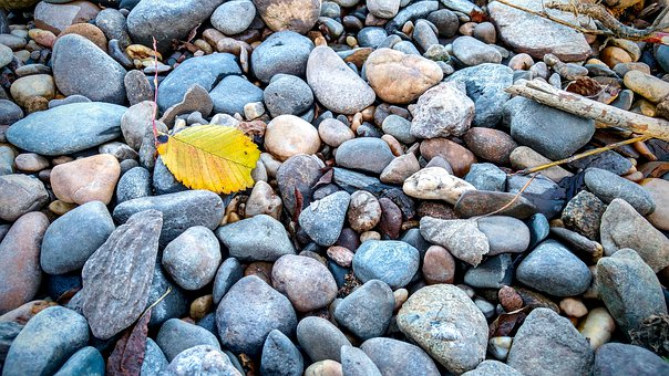 Stones, Leaves, Yellow, River, Elbe, Dresden, Nature