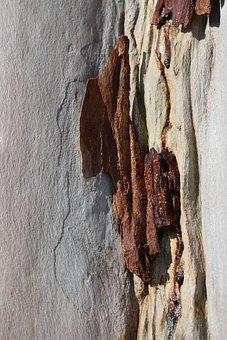 Background, Eucalyptus, Tree, Bark, Sap, Peeled, Nature