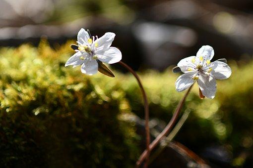 Change In The Acid Breeze Flower, Flowers, Spring