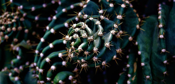 Cactus, Plant, Nature, Green, Spur, Prickly, Pattern
