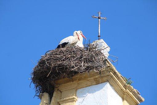 Storks, Birds, Nature, Stork, Animals, Pen, Plumage
