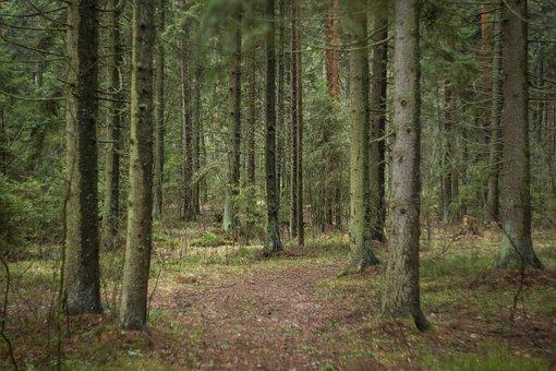 Kids, Family, Forest, Stroll, Beauty
