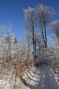Owl, Sowia Dolina, Winter, Beeches, Tree