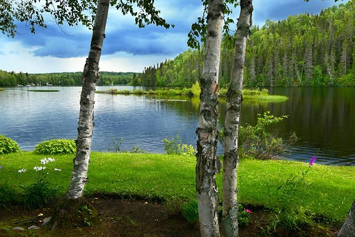 Landscape, Nature, Trees, Birch, Water, Reflections