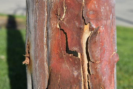 Bark, Peeled, Tree, Nature, Wood