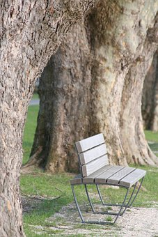 Bench, Wooden Bench, Tree Wood, Plane Trees