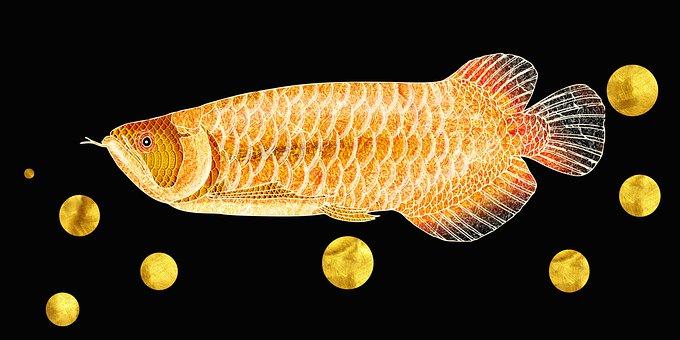 Fish, Animal, Water, Isolated, Strange