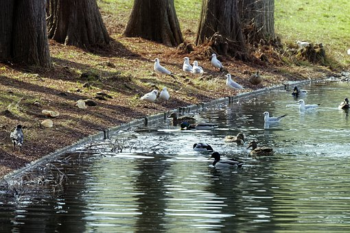 Landscape, Birds, Lake, Water, Trees, Grass, Winter