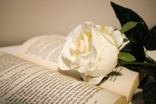 Roses, Flower, White, Purity, Book