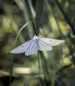 Butterfly, Butterflies, Butterfly Night, A Moth, Mols