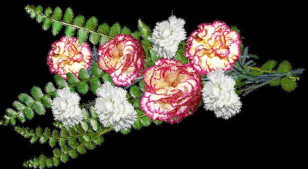 Flowers, Carnations, Fern, Leaves, Decoration
