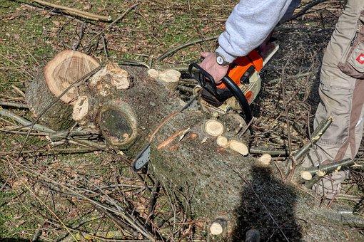 Wood, Cut, Garden, Autumn, Spring, Tool, Saw, Gardening