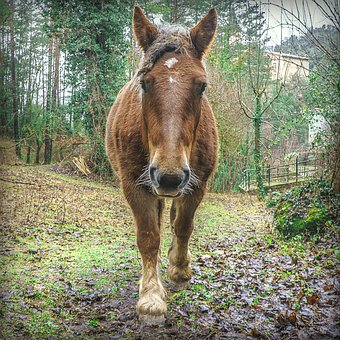 Horse, Young, Colt, Red, Cute, Sweet, Cuddly, Mammals