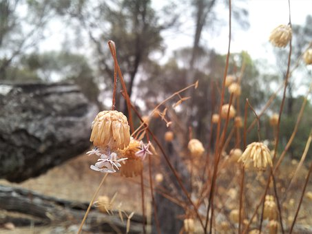 Earth Hour, Flower, Country, Dry, Dried Flower, Plant
