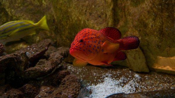 Fish, Sea, Water, Underwater, Animal