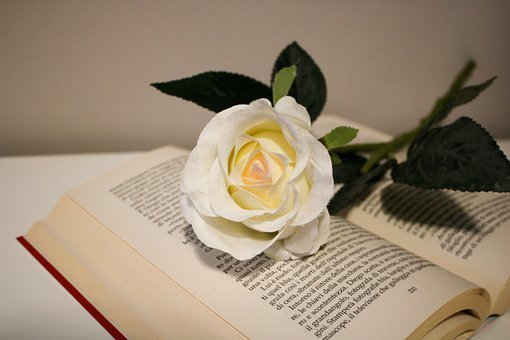 Roses, Flower, White, Purity, Book, Reading, Relaxation