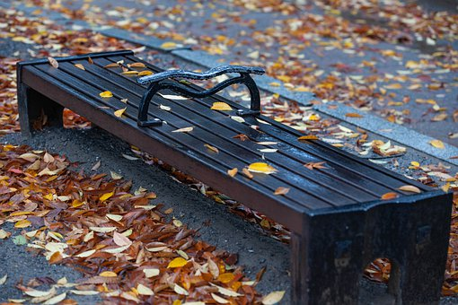 Chair, Leaves, Autumn, Korea, Nature, Color