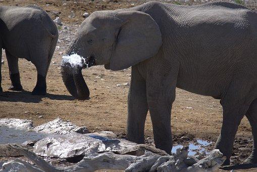 Namibia, Elephant, Big Five, Etosha, National Park