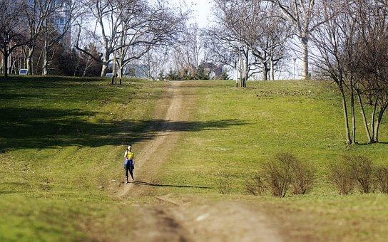 Landscape, Nature, Park, Trees, Grass, Plants