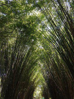 Bamboo, Ceu, Tunnel, Plant, Green, Nature