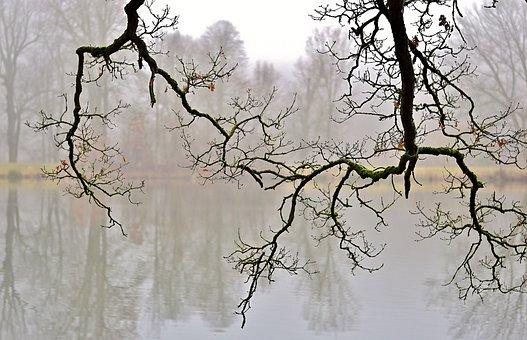Nature, Park, Aesthetic, Water, Fog