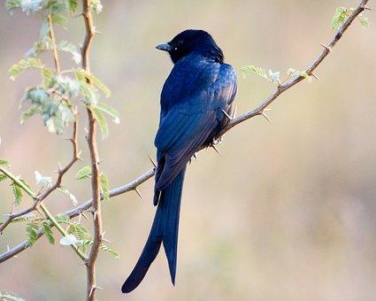 Bird, Bird Photography, Nikon, Wildlife