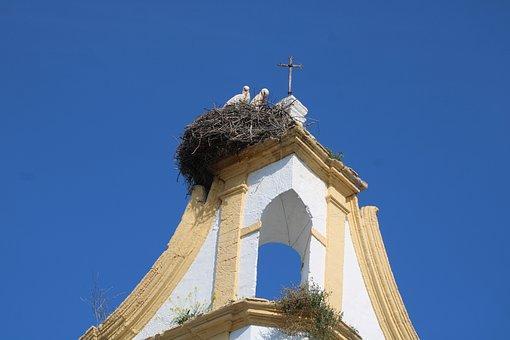 Storks, Birds, Animals, Landscape, Stork, Pen, Plumage