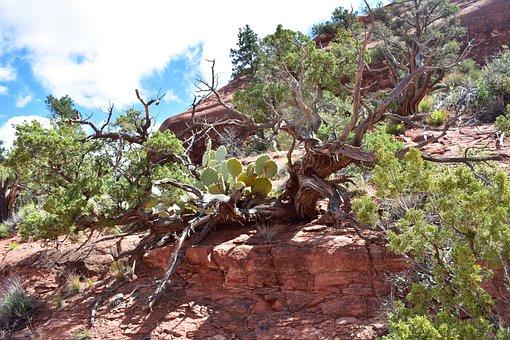Sedona, Arizona, Landscape, Nature