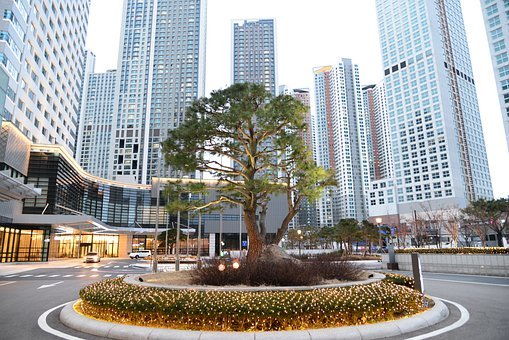 Tree, Skyscrapers, Architecture, City