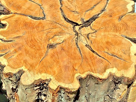 Tree, Annual Rings, Log, Wood, Structure, Cracks