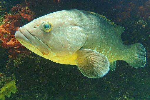 Aquarium, Water, Fish, Zoo, Meeresbewohner