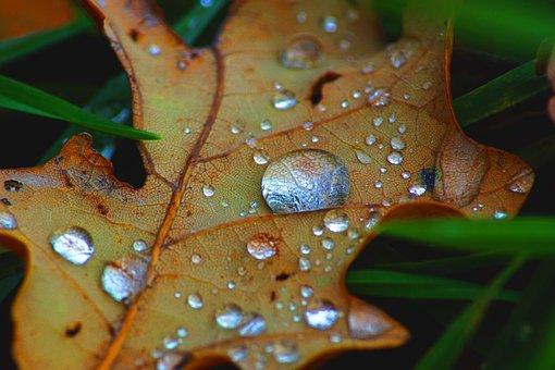 Water Drop, Leaf, Winter, Orange, Wet, Clear, Raindrop