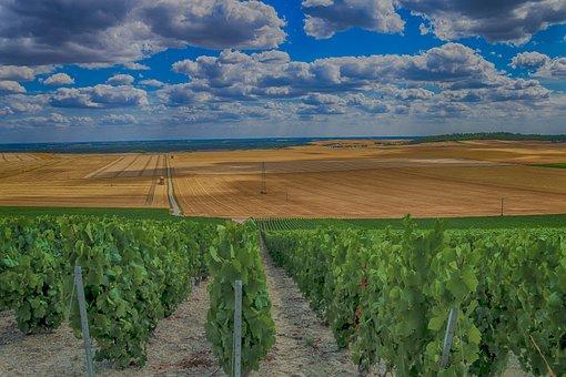 Landscape, Vines, Champagne, Wine, Earth, Grapes