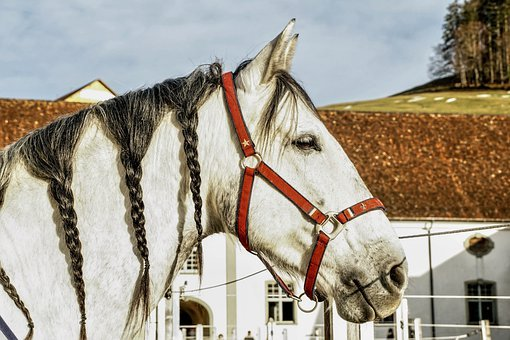 Horse, Mold, Horse Head, Animal, Coupling, Reiterhof