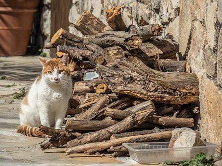 Cat, Animal, Lena, People, Rural, Mont-ras, Tarragona