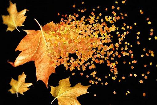 Autumn, Autumn Leaves, Background