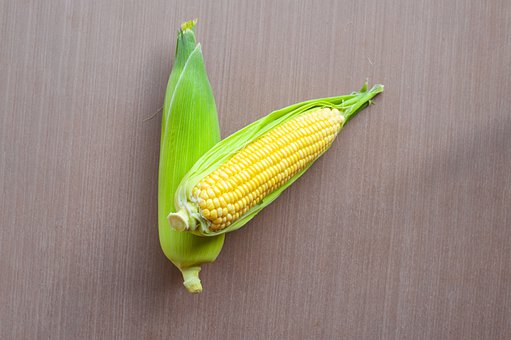 Agriculture, Background, Cob, Corn, Crop, Diet, Farm