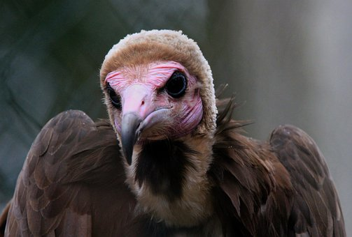 Bird, Vulture, Zoo, Nature, Animal