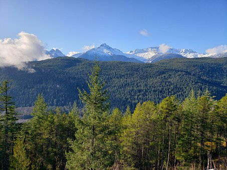 Mountain, Forest, Nature, Trees, Calm