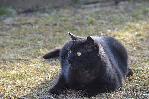 Cat, Garden, Black
