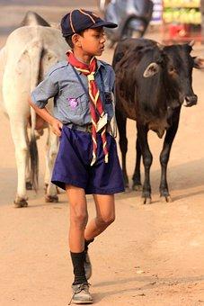 Child, Fier, Cow, India, Bull, Culture