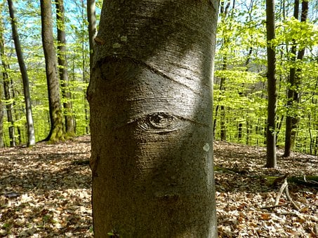 Big Brother, Forest, Tree, Nature, Light, Eye, Hiking