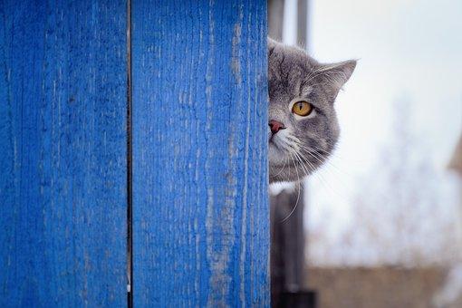 Cat, Fence, View, Eye, Grey