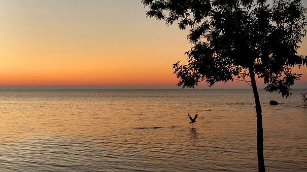 Lake Huron, Michigan, Sunrise, Seagull, Flying
