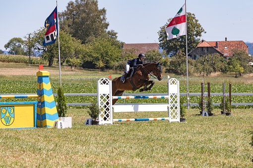 Show Jumping, Horse, Jump, Sport, Strength, Force