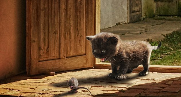 Animal, Cat, Mouse, Play, Cute, Funny, Kitten