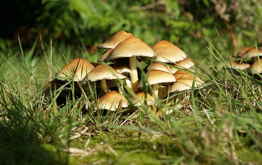 Mushroom, Grass, Green, Garden, Brown