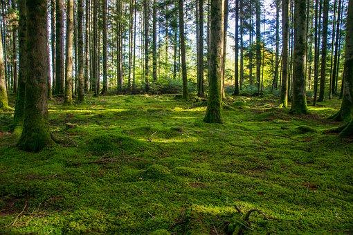 Forest, Undergrowth, Vegetal, Landscape, Nature