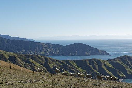 New Zealand, Okuri Bay, Bay, Sea, Water