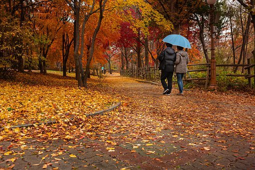 Old Couple, Autumn, Park, Leaves, Nature